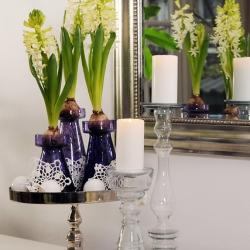 Hyacinthus 'White Pearl'...